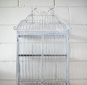 Bird Cages -